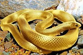 chiêm bao thấy con rắn