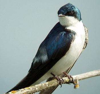 Giải Mã Giấc Mơ Thấy Chim Nhạn, Mơ Thấy Trứng Chim, Tổ Chim Là Điềm Gì