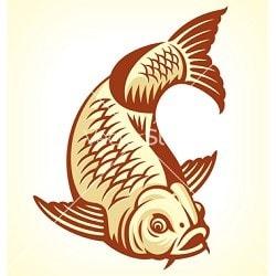 Ngủ mơ thấy cá chép là sao, giải mã giấc chiêm bao mơ thấy con cá chép