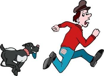 Kết quả hình ảnh cho chó đuổi chạy xuống ao