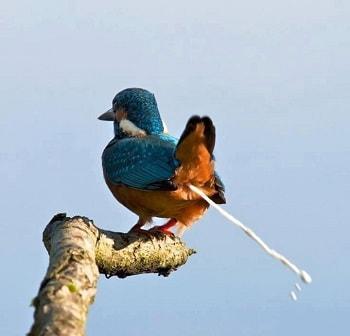 Mơ thấy chim ỉa vào người là điềm báo gì